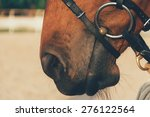 Horse Nose   Soft Focus With...