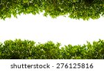 Banyan Green Leaves Isolated On ...
