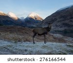 scottish deer       | Shutterstock . vector #276166544
