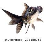 black  goldfish isolated on... | Shutterstock . vector #276188768