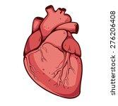 real heart. vector illustration | Shutterstock .eps vector #276206408