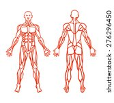 anatomy of male muscular system ... | Shutterstock .eps vector #276296450