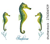 Watercolor Seahorse Isolated On ...