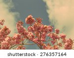 Small photo of Beautiful Accolade Cherry (Prunus Accolade ) Blossom Against Sky with Retro Effect
