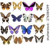 Stock photo collection of beautiful tropical butterflies isolated on white background set of realistic colorful 276384299