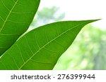 Breadfruit Leaf  Natural...
