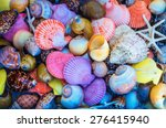 Closeup Of Colorful Sea Shell...