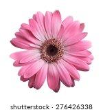 Pink Gerbera Daisy Isolated On...