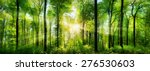 panorama of a scenic forest of... | Shutterstock . vector #276530603