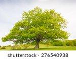 Photo Of Big Beech Tree...