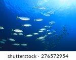 School Mackerel Fish Underwater