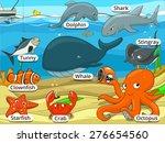 Underwater Animals And Fish...
