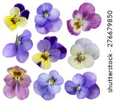Viola Flowers Isolated On A...