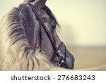 portrait of a sports stallion... | Shutterstock . vector #276683243