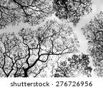 Silhouette Of Tree. Black And...