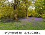 woodland glade of bluebells