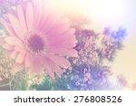 gerbera daisy image with... | Shutterstock . vector #276808526