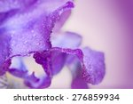 Purple Iris Flower Macro On A...