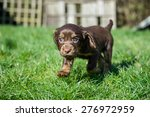 dog | Shutterstock . vector #276972959