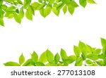 beautiful frame with fresh...   Shutterstock . vector #277013108