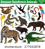 Amazon Rainforest Jungle...