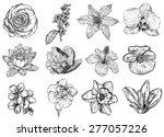 vector illustration of flowers... | Shutterstock .eps vector #277057226