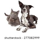 Stock photo curious black and white dog and cat laying together on a white background 277082999