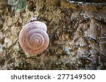 Snail Shell Lefts The House At...