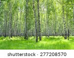 Summer Rural Landscape With Th...