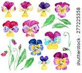 Set Of Flowers Viola....