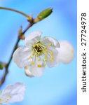 spring blossoms   Shutterstock . vector #27724978
