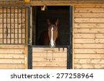 A Beautiful Purebred Bay Horse...