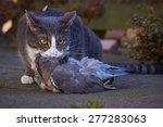 cat with prey | Shutterstock . vector #277283063