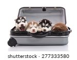 four siberian husky puppies... | Shutterstock . vector #277333580