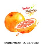 vector watercolor hand drawn... | Shutterstock .eps vector #277371980