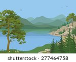 Landscape With Pine  Fir Trees...