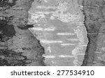 black and white birch bark... | Shutterstock . vector #277534910