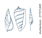 vector line art seashells | Shutterstock .eps vector #277571309
