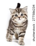 Stock photo british tabby kitten isolated on white 277586234