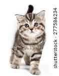 british tabby kitten isolated... | Shutterstock . vector #277586234