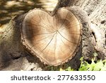 Cross Section Of Tree Rings ...