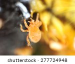 Small photo of Super macro of microscopic yellow acarid