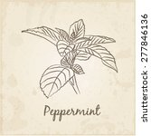 kitchen hand drawn herbs and...   Shutterstock .eps vector #277846136