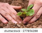 Hands Of Women Planting...