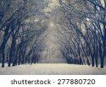 Beautiful Winter Alley