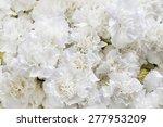 White Carnations Background