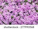 phlox styloid texture | Shutterstock . vector #277993568