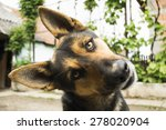 funny face dog looking at the... | Shutterstock . vector #278020904