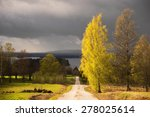 Country Road And Birch Trees...