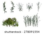 plant isolated collection | Shutterstock . vector #278091554
